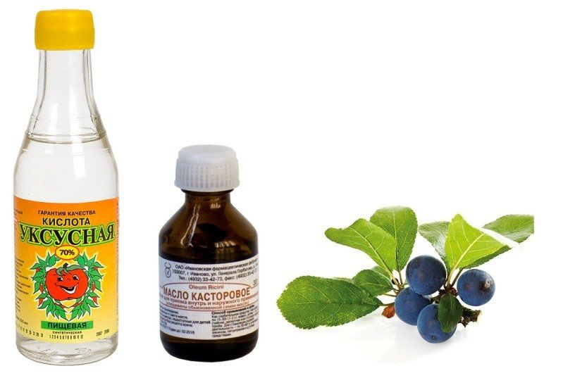 Уксусная кислота, касторка и кислая слива для лечения бородавок