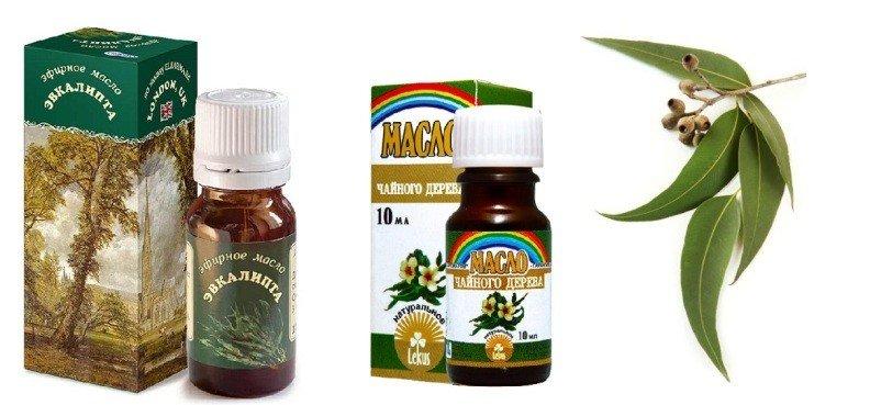 Веточка эвкалипта и масла эвкалипта и чайного дерева