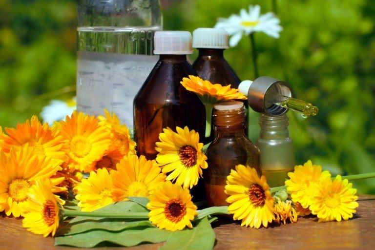 Цветки календулы, настойки и масла