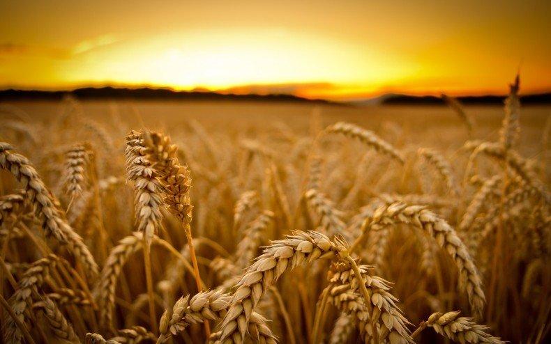 Длинные, густые и пушистые ресницы с маслом из зародышей пшеницы