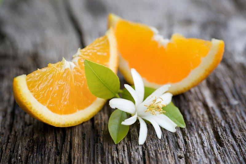 Плоды и цветок апельсинового дерева