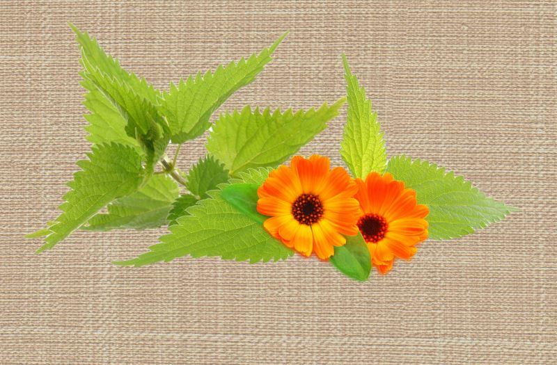 Листья крапивы и цветки календулы