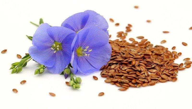Семена и цветки льна