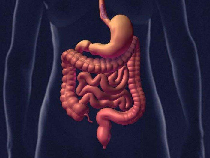 Изображение кишечника