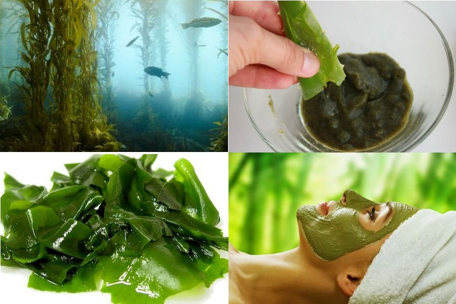 Эффект от процедур с морскими водорослями