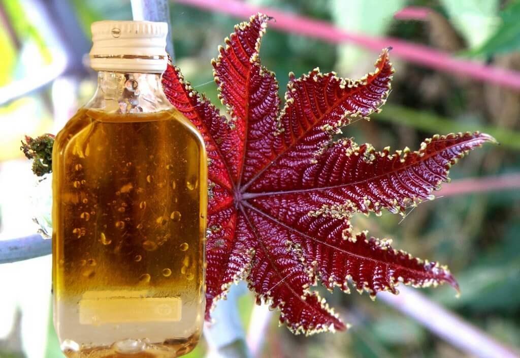 Касторовое масло от целлюлита