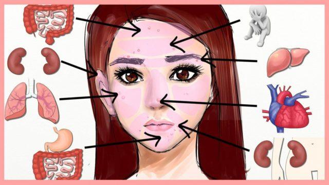 Рисунок лицо девушки и внутренние органы