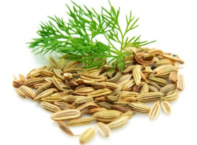 Семена и веточка укропа