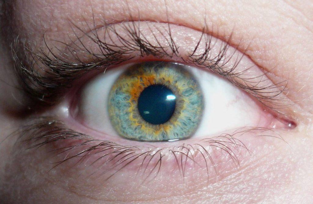 название цветов глаз с фото воспользовались, дабы пополнить