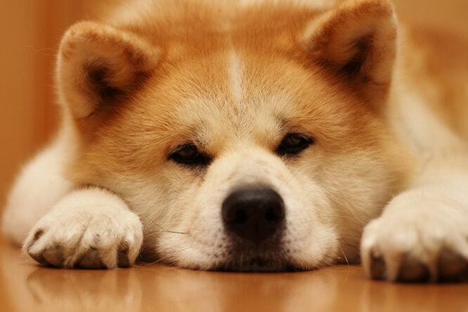 Проблемы с почками у собак. Причины. Симптомы. Лечение.
