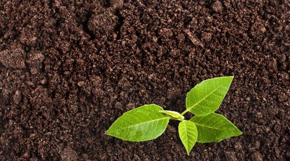 Зачем нужен почвогрунт?